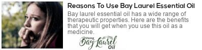 laurus nobilis medicinal uses